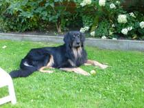 ...Baxter ganz relaxed...;-))